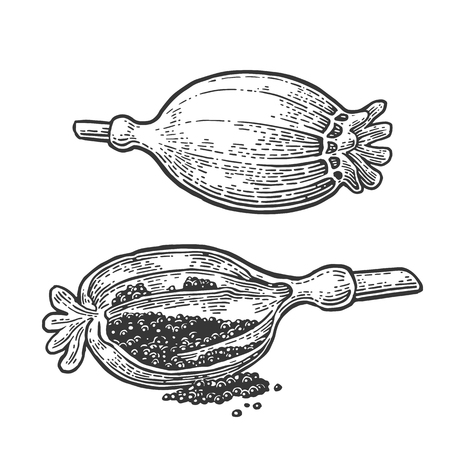 ポピーの頭と種子。刻まれたベクトル ブラック ビンテージ
