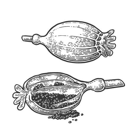 Poppy heads and seeds. Vector black vintage engraved Reklamní fotografie - 80976093