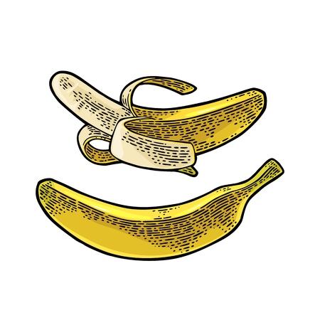 Whole and half peeled banana. Vector black vintage engraving Illustration