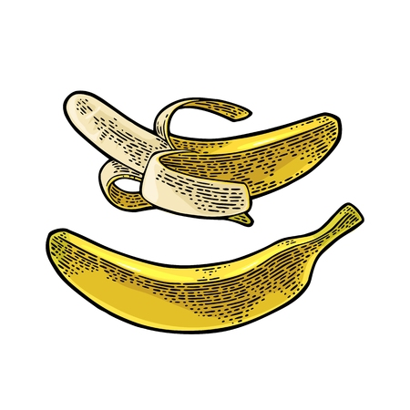 Whole and half peeled banana. Vector black vintage engraving Иллюстрация