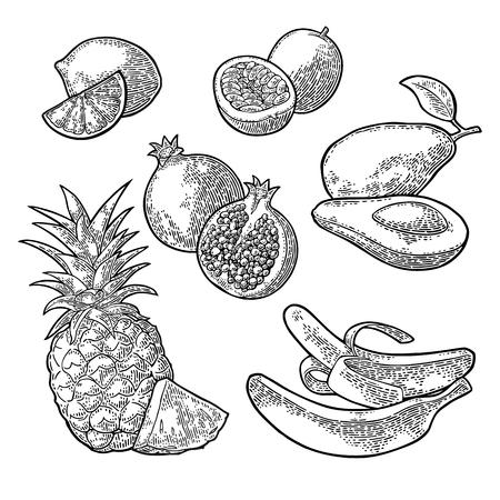 Set tropical fruits. Pineapple, lime, banana, pomegranate, maracuya, avocado. Stock Vector - 81104059