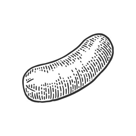 Sausage. Vintage vector engraving illustration