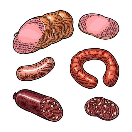 Set meat sausage. Vintage color vector engraving illustration.