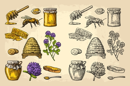 Honey set. Jars of honey, bee, hive, clover, spoon, cracker, bread and honeycomb. Vector vintage color engraved illustration.