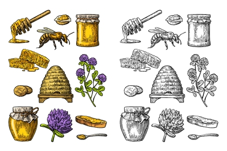 Honey set. Jars of honey, bee, hive, clover, spoon, cracker, bread and honeycomb. Vector vintage color engraved illustration. Isolated on white background Illustration