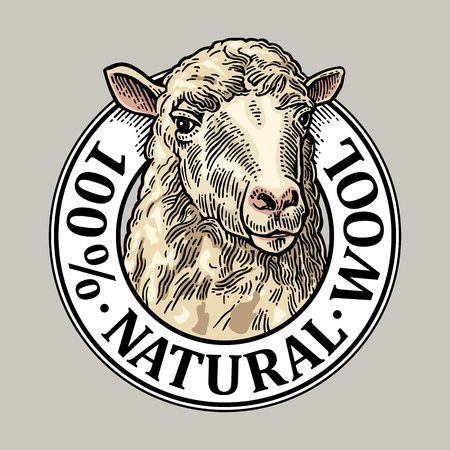 Sheep head. 100 Natural wooll lettering. Hand drawn in a graphic style. Vintage vector engraving illustration for label, poster, logotype. Isolated on white background