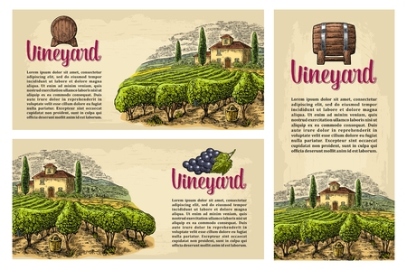 Wine labels. Çizim