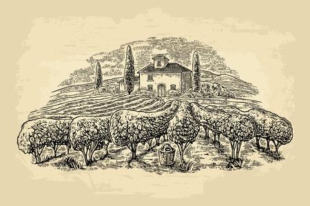 Paisaje rural con villa, viñedos y colinas. Grabado vectorial Ilustración de vector