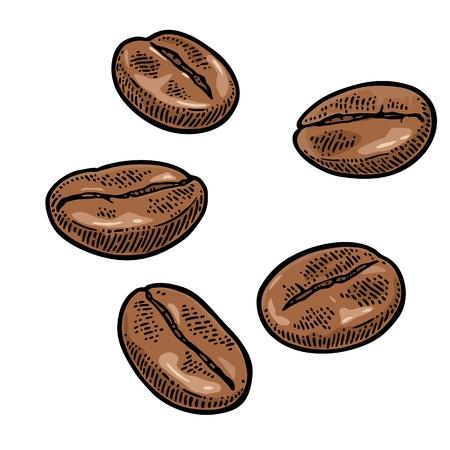 Kaffeebohnen. Hand gezeichnete Skizze Stil. Weinlesevektorfarbstichillustration für Aufkleber, Netz. Getrennt auf weißem Hintergrund. Standard-Bild - 86204938