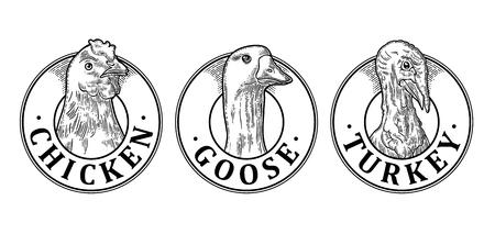 Cabeza de pavo, pollo y ganso con letras. Dibujado a mano en un estilo gráfico. Ilustración de grabado de vector negro vintage para etiqueta, cartel, logotipo. Aislado en el fondo blanco Foto de archivo - 86204946