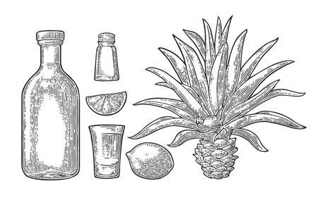 ガラスと果物とテキーラのボトル。