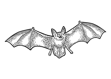 Illustration of a flying bat with scary face. Illustration
