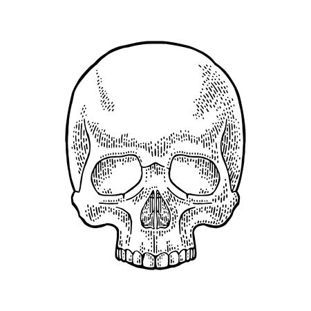 Illustration of a black vintage human skull.