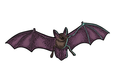 Bat flying vector