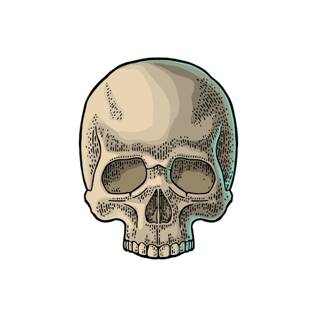 Skull human. Color vintage vector illustration. For poster and tattoo biker club or invitation Halloween. Hand drawn design element isolated on white background Иллюстрация