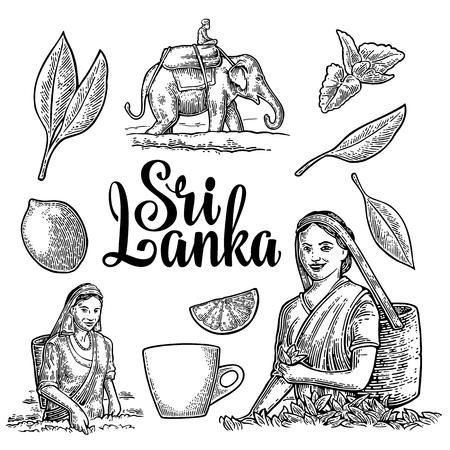 Cueilleuses de thé femmes récoltant des feuilles, cavalier sur éléphant, citron, tasse. Banque d'images - 87269901