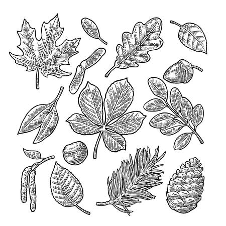 Stel blad, eikel, kastanje en zaad. Vector vintage gegraveerde illustratie. Stock Illustratie