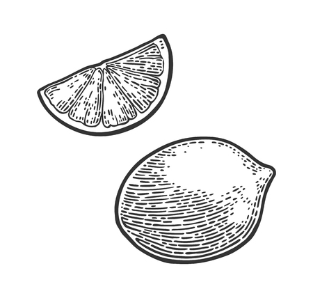 Lemon Slice and whole. Vector black vintage engraving Иллюстрация