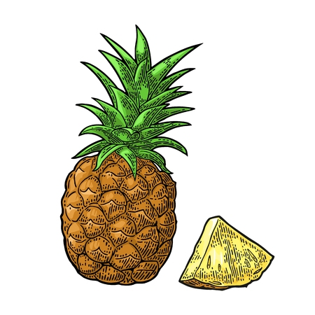 Whole and slice pineapple. Vector black vintage engraving Ilustração