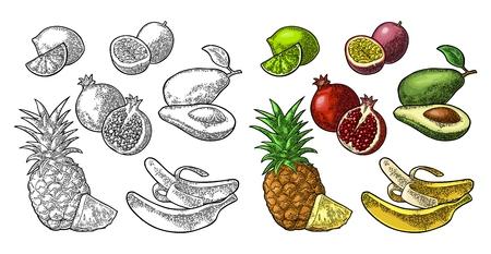 Establecer frutas tropicales. Piña, lima, plátano, granada, maracuyá, aguacate. Foto de archivo - 87566345