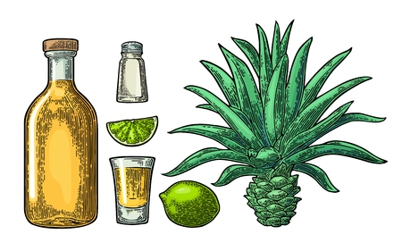 Glass and botlle of tequila. Cactus, salt, lime Illustration