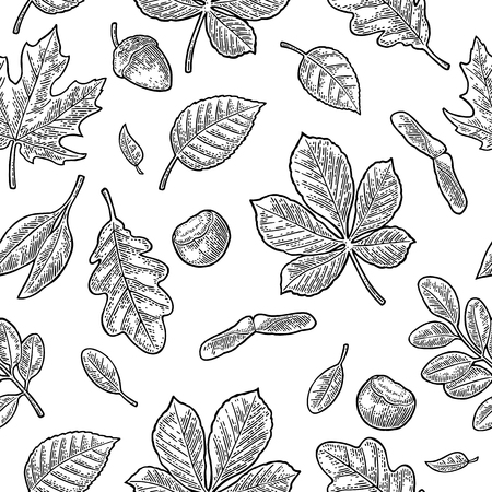 Seamless pattern leafs, acorn, chestnut and seed. Vector vintage engraving Stock Vector - 87935723