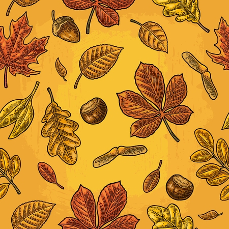 Seamless pattern leafs, acorn, chestnut and seed. Vector vintage engraving