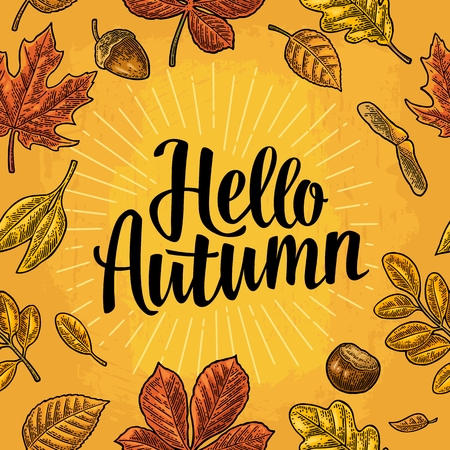 Seamless pattern leafs, acorn, chestnut and seed. Hello Autumn lettering. Ilustrace