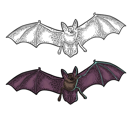 Bat flying with scary face. Vector black vintage engraving