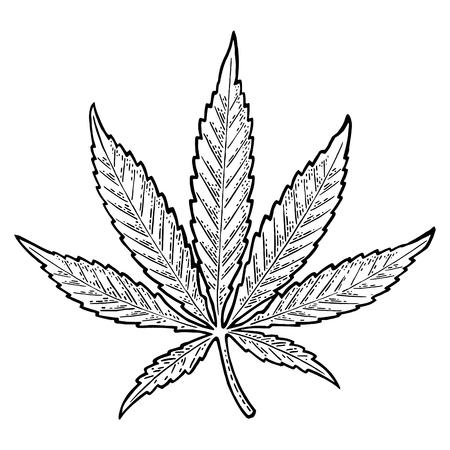 Marihuanablad. Vintage zwarte vector gravure illustratie Stockfoto - 88032432