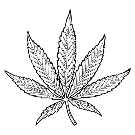 Marijuana leaf. Vintage black vector engraving illustration