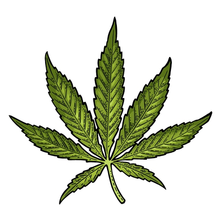 マリファナの葉。ビンテージ黒ベクトル彫刻イラスト