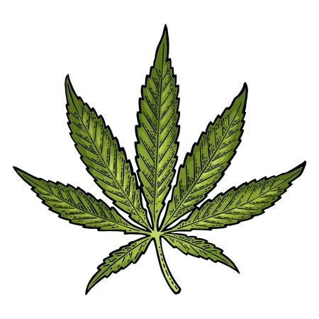 마리화나 잎. 빈티지 검은 벡터 조각 그림 일러스트
