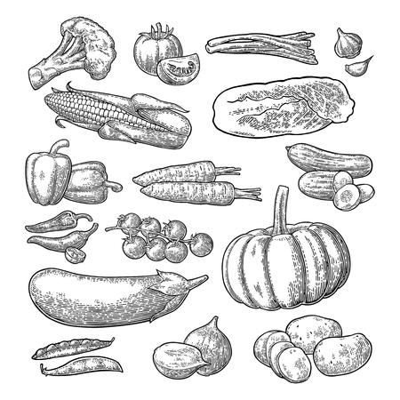 Ustaw warzywa. Ogórki, czosnek, kukurydza, papryka, brokuły, ziemniaki i pomidory.