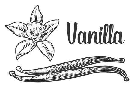 Vanilla stick and flower in black vintage engraved