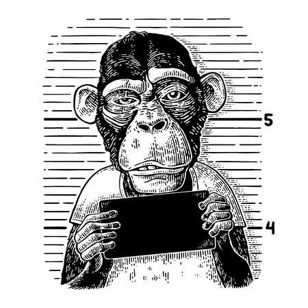 Apen die banner houden Stock Illustratie
