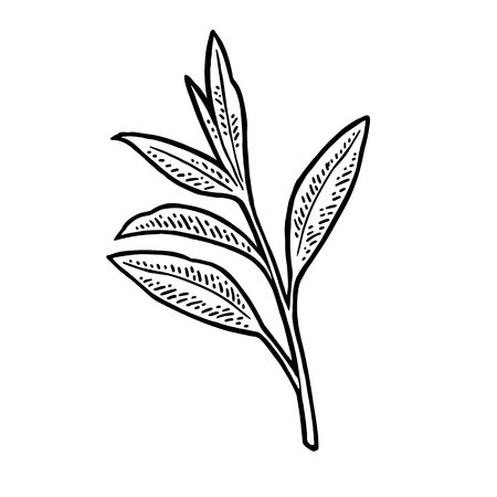 Tea branch with leaves icon.