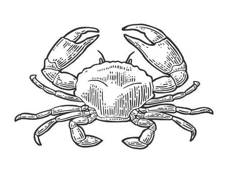 Caranguejo isolado no fundo branco. Ilustración de vector