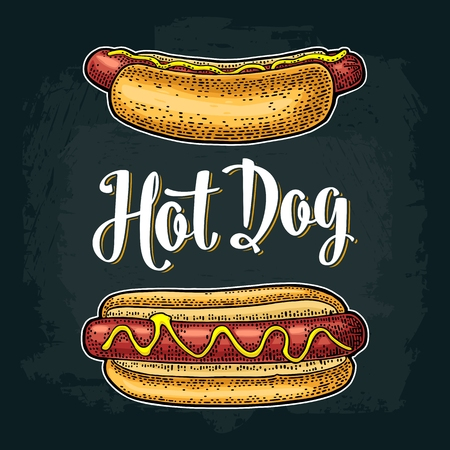 Hotdog with tomato, mustard, leave lettuce. Vector color engraving