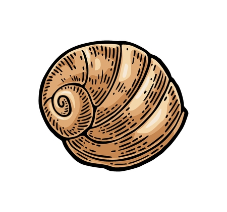 海シェル オウム貝。色はヴィンテージのイラストを彫刻します。白い背景に分離