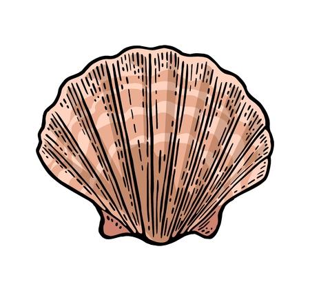 바다 쉘 가리비입니다. 색 조각 빈티지 그림입니다. 흰색 배경에 고립.