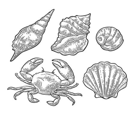Crabe et coquille isolé sur fond blanc. Illustration de gravure vintage Vector noir pour menu, web et étiquette. Main dessinée dans un style graphique. Banque d'images - 89747552