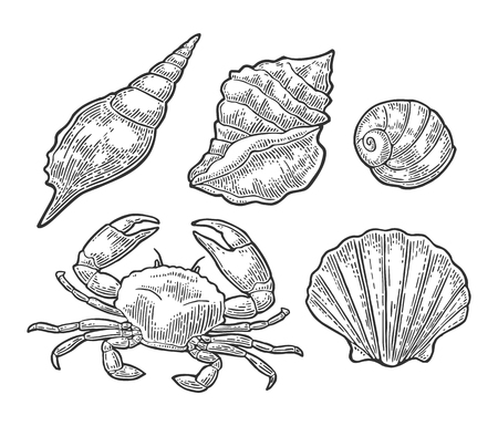 Krabbe und Shell getrennt auf weißem Hintergrund. Vector schwarze Weinlesestichillustration für Menü, Netz und Aufkleber. Hand gezeichnet in eine grafische Art. Standard-Bild - 89747552