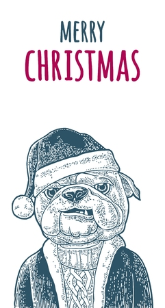 Dog santa claus in hat, coat, sweater and merry christmas handwriting lettering vintage color engraving illustration for poster.