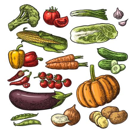 野菜を設定します。キュウリ、白菜、エンドウ豆の鞘、Onoin、ニンニク、トウモロコシ、ピーマン、ブロッコリー、ジャガイモとトマト。白い背景上