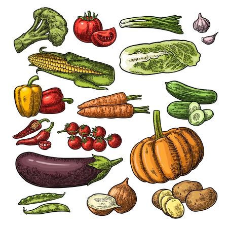 Définir les légumes. Concombres, chou Napa, gousse de pois, onoïne, ail, maïs, poivre, brocoli, pomme de terre et tomate. Isolé sur le fond blanc. Illustration de gravure vintage de vecteur à la main noire dessinée