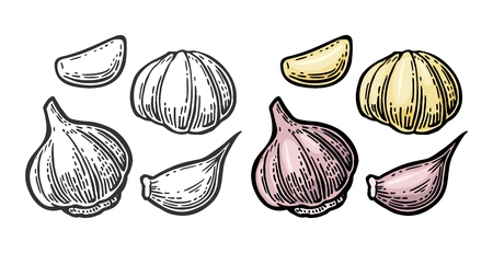 Garlic with slices isolated on white background. Vector vintage engraving Illustration for menu, web and label