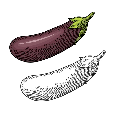 Eggplant. Vector color vintage engraved illustration isolated on white background