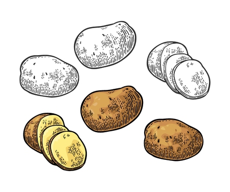 Potato whole and slice. Vector engraving vintage Illustration