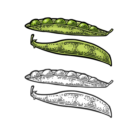 Peas pods - close and open. Vector black vintage engraved